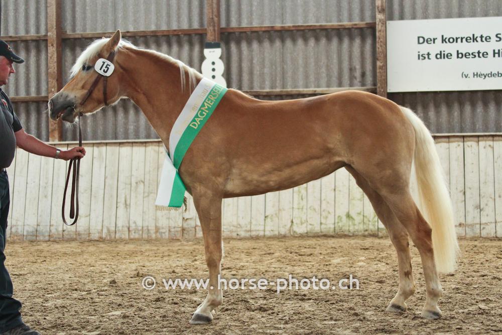 F d ration suisse du haflinger fsh for Exterieur beurteilung pferd
